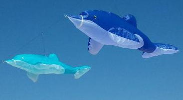 Class 3d Dolphin Oregon Kitemakers Retreat